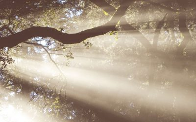 Introduction to The Nature of God: The Revelation